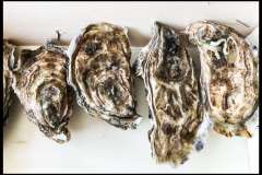 Huîtres de Listrec