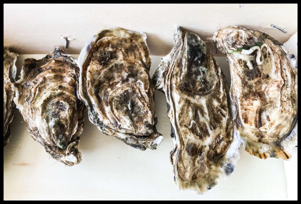 Les huîtres de Listrec
